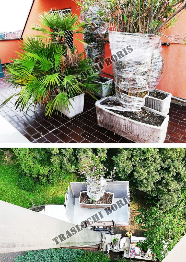 traslocare piante a milano