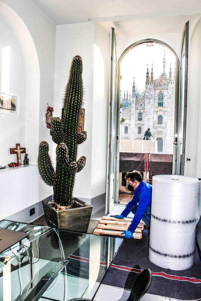 trasporto-cactus